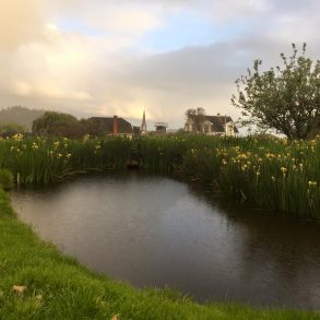 Rain on the pond surrounded by flowers