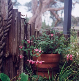 Flower pot by wood fencing