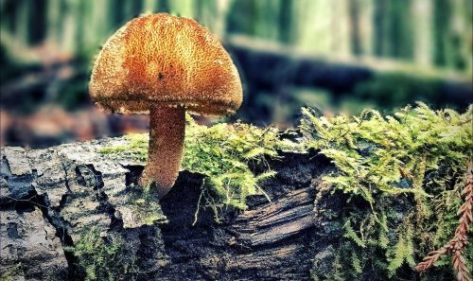 Mushroom Festival Header